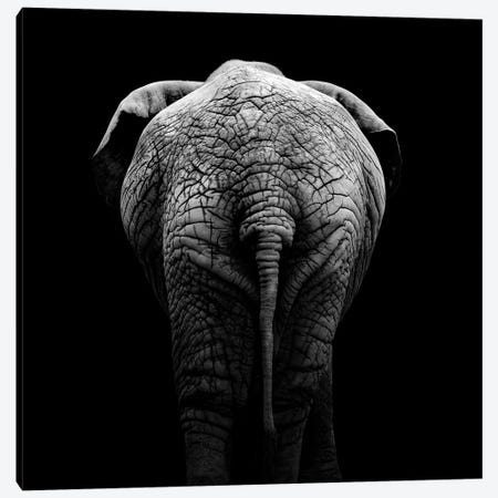 Elephant In Black & White II Canvas Print #LUK8} by Lukas Holas Canvas Art Print