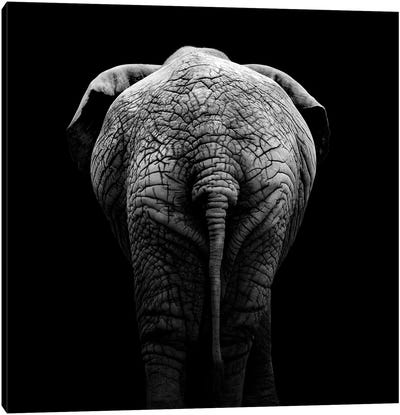 Elephant In Black & White II Canvas Art Print