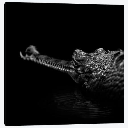 Gavial In Black & White Canvas Print #LUK9} by Lukas Holas Art Print