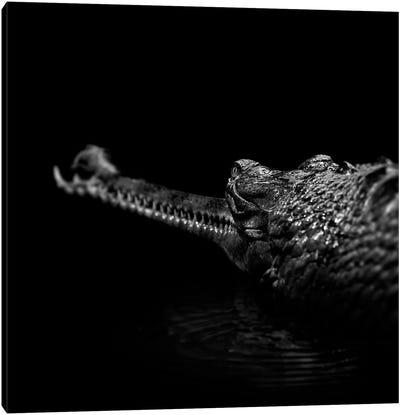 Gavial In Black & White Canvas Art Print