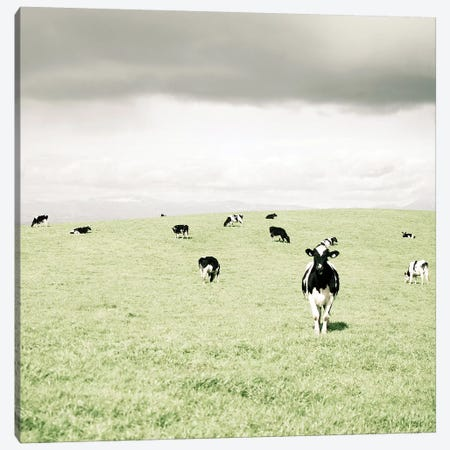 Curious Cows Canvas Print #LUP11} by Lupen Grainne Canvas Art