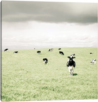Curious Cows Canvas Art Print