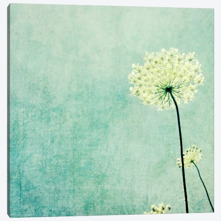 Efflorescence Canvas Print #LUP14} by Lupen Grainne Art Print