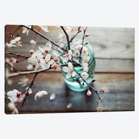 Fallen Petals Canvas Print #LUP16} by Lupen Grainne Canvas Art Print