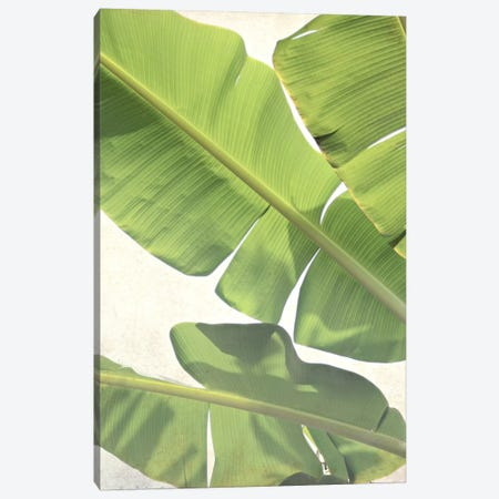Green Banana Canvas Print #LUP18} by Lupen Grainne Canvas Artwork