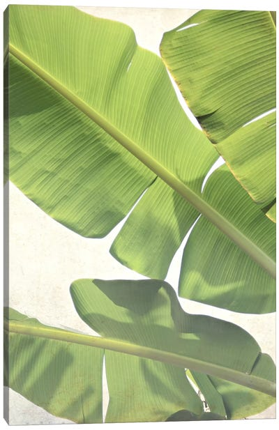 Green Banana Canvas Print #LUP18