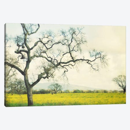 Green Gold Canvas Print #LUP19} by Lupen Grainne Canvas Wall Art