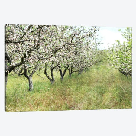 Apple Orchard Canvas Print #LUP1} by Lupen Grainne Canvas Print