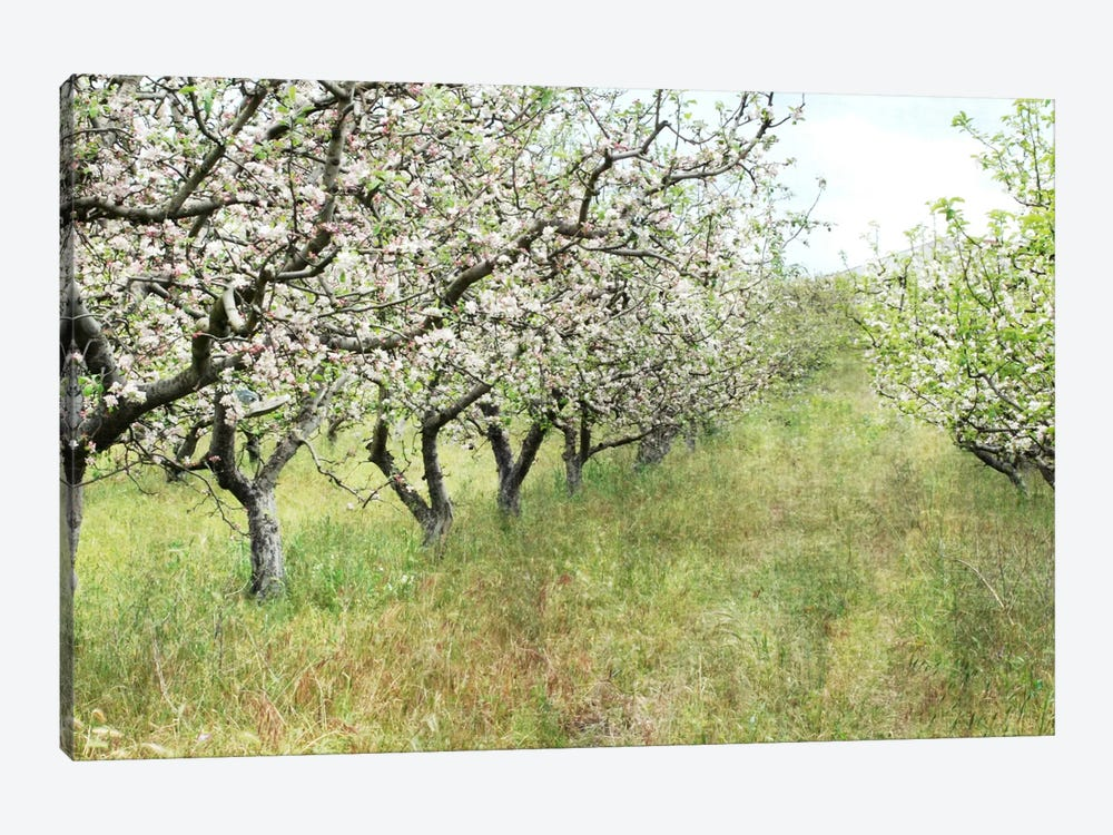 Apple Orchard by Lupen Grainne 1-piece Canvas Art