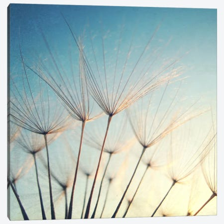 Make A Wish Canvas Print #LUP22} by Lupen Grainne Canvas Print