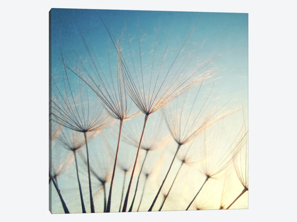Make A Wish by Lupen Grainne 1-piece Canvas Art Print