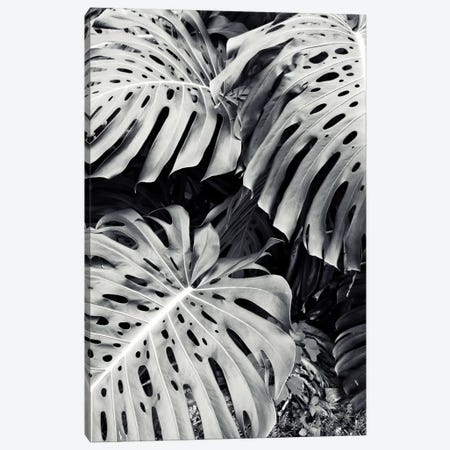 Monstera Canvas Print #LUP23} by Lupen Grainne Canvas Art Print