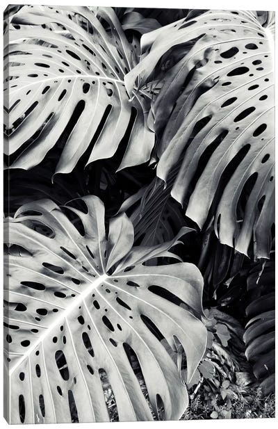 Monstera Canvas Art Print