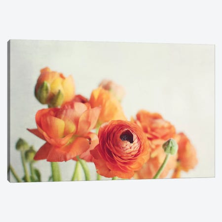Orange You Glad Canvas Print #LUP25} by Lupen Grainne Canvas Artwork