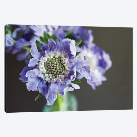 Purple Scabiosa 3-Piece Canvas #LUP35} by Lupen Grainne Canvas Art Print