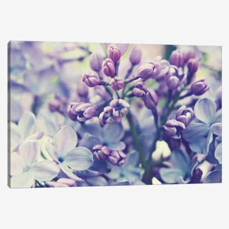 Scent Of Lilac  Canvas Print #LUP37} by Lupen Grainne Canvas Print