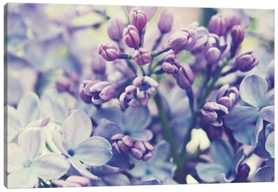 Scent Of Lilac  Canvas Art Print