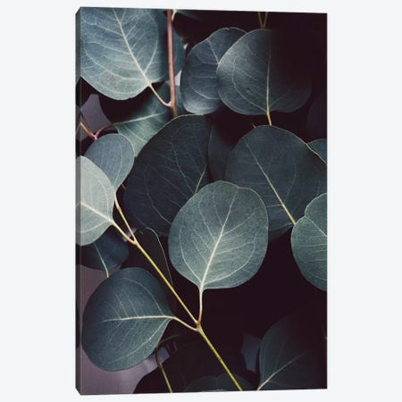 Eucalyptus Leaves Canvas Print #LUP45} by Lupen Grainne Canvas Art