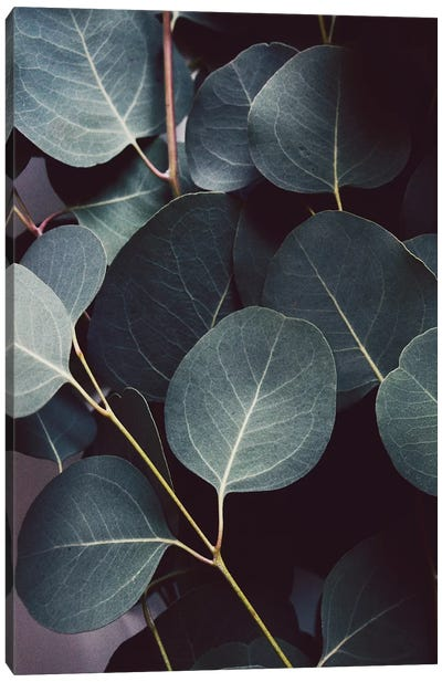 Eucalyptus Leaves Canvas Art Print
