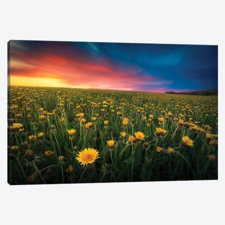 Dandelion Field Canvas Print #LUR10} by Lauri Lohi Canvas Artwork