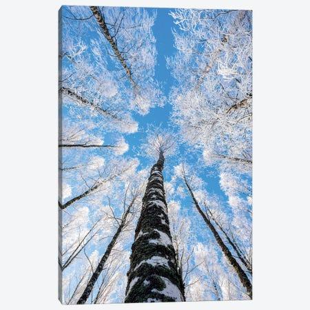 Reaching The Sky II Canvas Print #LUR137} by Lauri Lohi Art Print