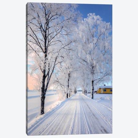 Winter Road II Canvas Print #LUR139} by Lauri Lohi Canvas Wall Art