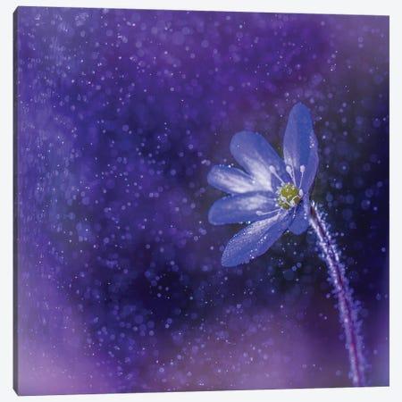 Flower In The Rain Canvas Print #LUR20} by Lauri Lohi Canvas Art Print