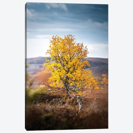 Lonely II Canvas Print #LUR42} by Lauri Lohi Canvas Print