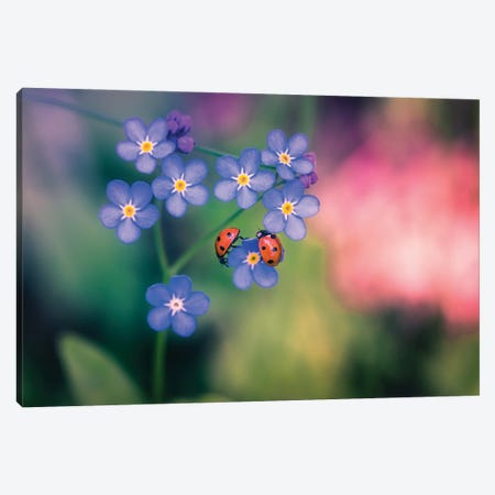 Ladybirds And Forget-Me-Not Canvas Print #LUR86} by Lauri Lohi Canvas Wall Art