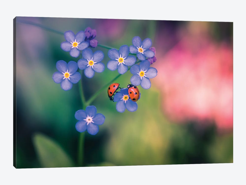 Ladybirds And Forget-Me-Not by Lauri Lohi 1-piece Canvas Artwork