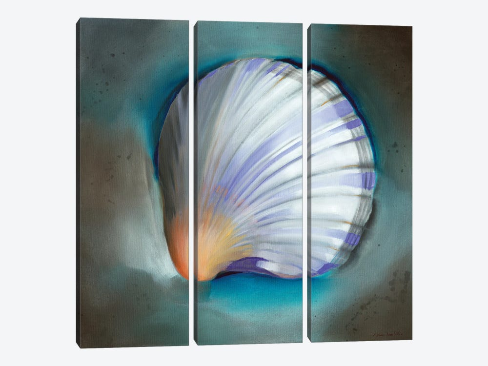 Clam Shell Glow by Louise Montillo 3-piece Canvas Print