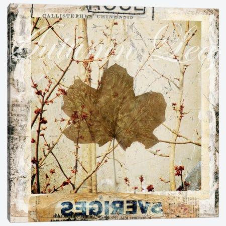 Autumn Leaf Canvas Print #LUZ45} by Luz Graphics Canvas Artwork