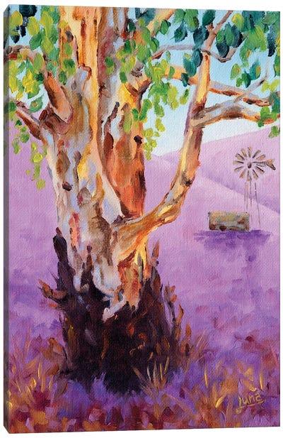 Wind Beneath The Gums Canvas Art Print