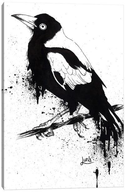 Outback Songbird Canvas Art Print