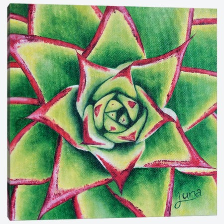 Prickly Pair I Canvas Print #LVE84} by Luna Vermeulen Canvas Print