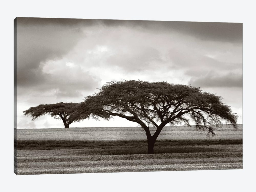 Acacia Trees by Jorge Llovet 1-piece Canvas Wall Art