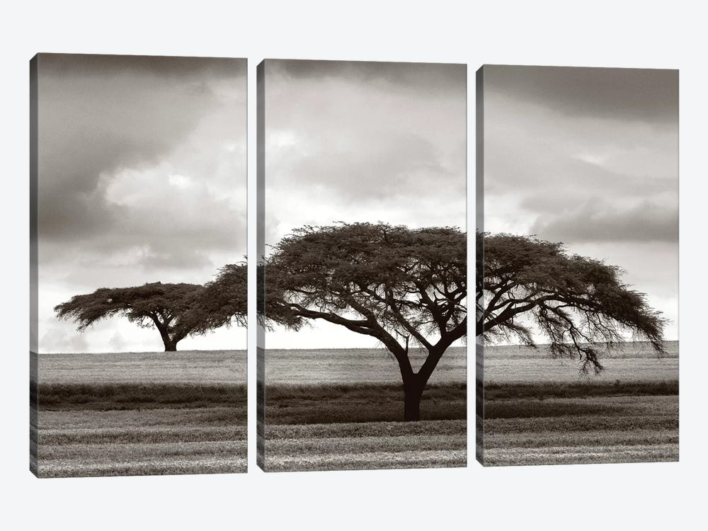Acacia Trees by Jorge Llovet 3-piece Canvas Artwork