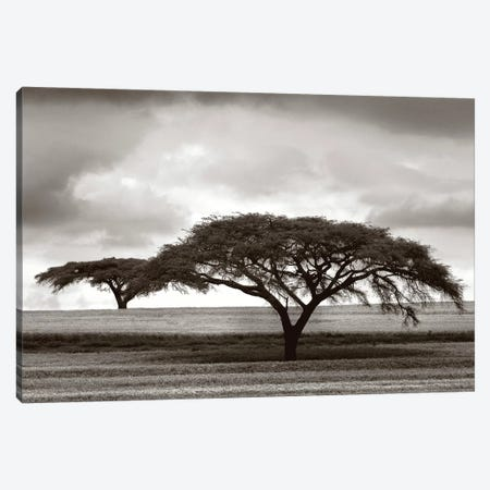 Acacia Trees Canvas Print #LVT1} by Jorge Llovet Canvas Wall Art