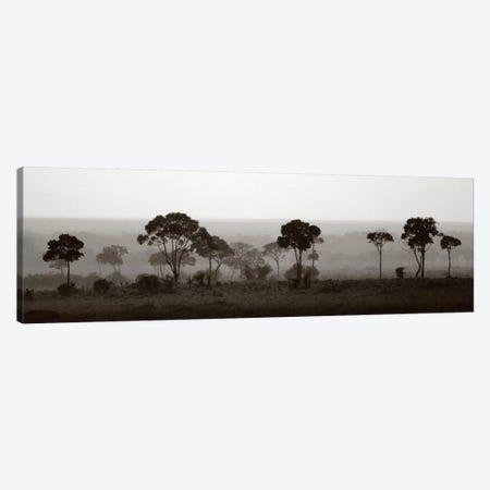 Tree Line Canvas Print #LVT2} by Jorge Llovet Canvas Art