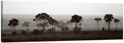 Tree Line Canvas Art Print