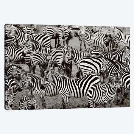 Zebra Abstraction Canvas Print #LVT3} by Jorge Llovet Canvas Artwork