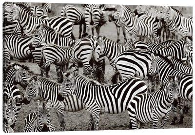 Zebra Abstraction Canvas Art Print