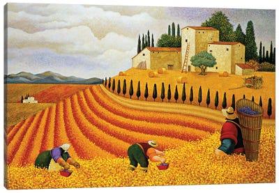 Village Harvest Canvas Art Print