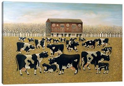 Cows Cows Cows Canvas Art Print