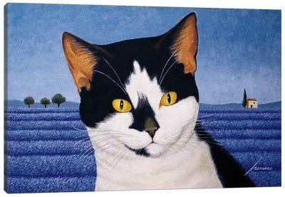 Orca Anawalt Canvas Art Print