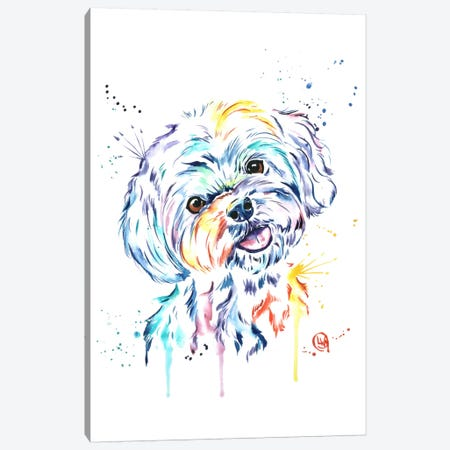 Havanese Canvas Print #LWH22} by Lisa Whitehouse Canvas Artwork
