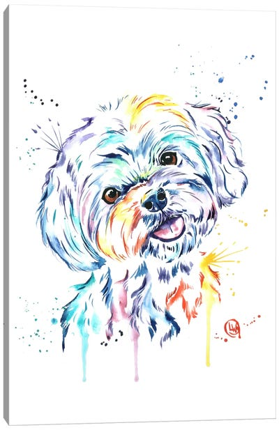Havanese Canvas Art Print
