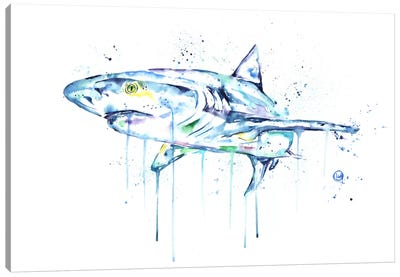 Shark Canvas Art Print