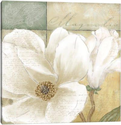 Aqua Magnolia II Canvas Art Print
