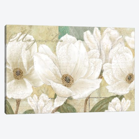 Magnolia Canvas Print #LWO3} by Linda Wood Canvas Art Print